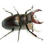 Уничтожение жуков